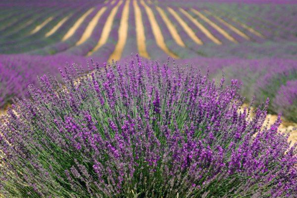 Und immer wieder die Provence